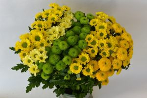 CHRYSANTHEMUM SANTINI MIX