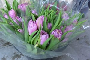 TULIPS DOUBLE PRICE