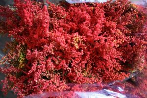 SOLIDAGO DYED RED